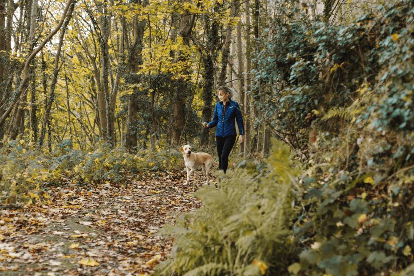 10 tips til at få en god gåtur med hunden