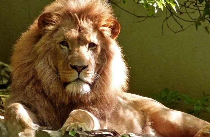Christian Stadil er færdig i Løvens Hule
