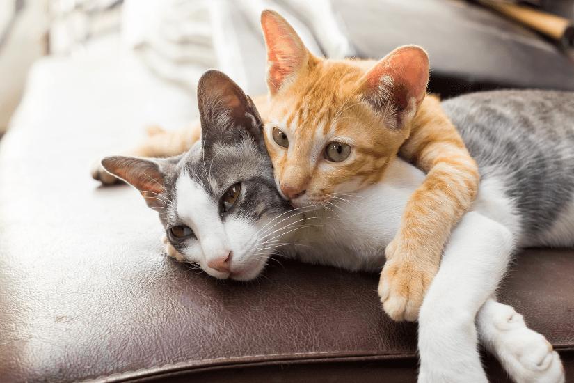 Hvem vil ikke gerne være kat? Derfor skal du have en huskat i hjemmet