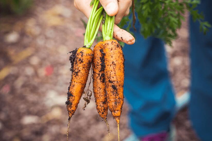 11 tips til bedre miljøvaner