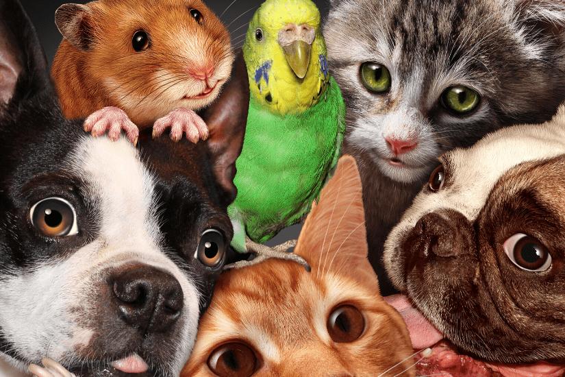 De Mest Populære Kæledyr: Se Listen Her!
