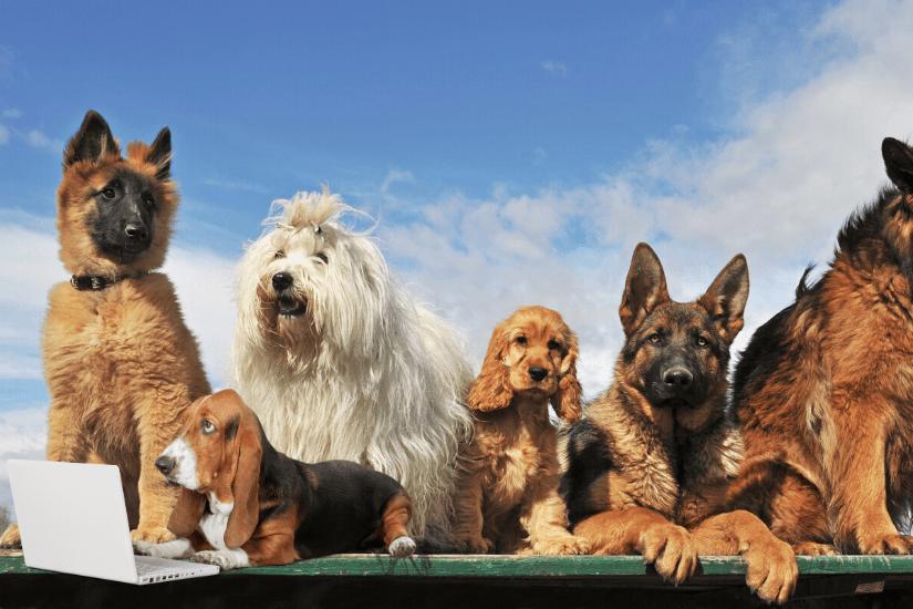 Hvilken hund skal jeg vælge? Disse 5 ting skal du overveje