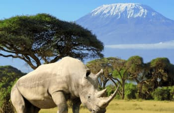 15 fakta om Kilimanjaro - Afrikas højeste bjerg