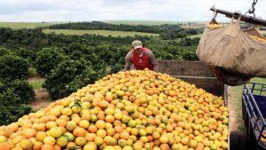 Farmer in Brazil