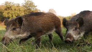 anti-swine flu border