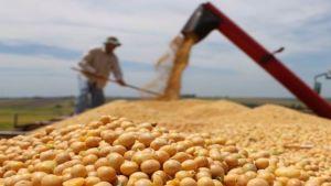 Brazil grain