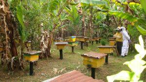 Ethiopian beekeepers
