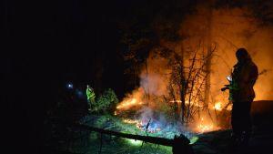 Forest fires in Sweden
