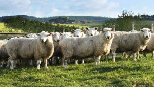 New Zealand farming