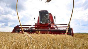 Russia China wheat