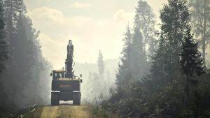 Sweden forest fires