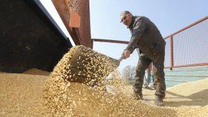 Ukraine's grain