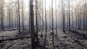 wildfires in Sweden