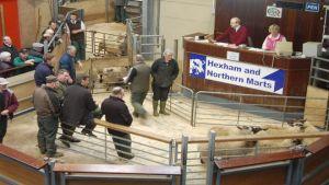 Hexham Auction