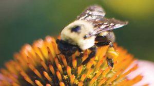 Florida pollinators