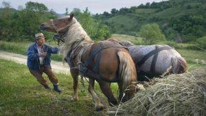 Romania farmer