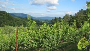 JBR Vineyards