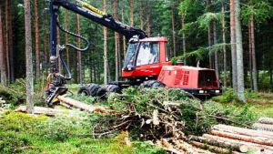 logging sector in Latvia