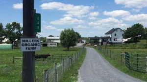 Miller organic farm