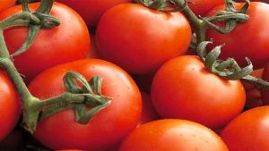 Moroccan tomatoes