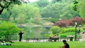 New York pond