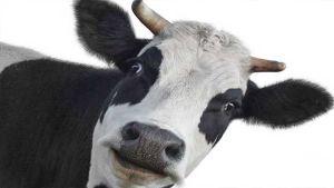European Dairy