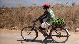 Angola bananas