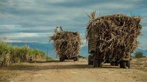 Cambodia sugar