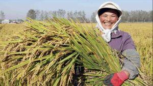 China farmers