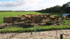 Denmark farming