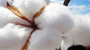 Australia cotton
