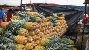 Costa Rican pineapples