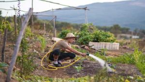 Morocco farmer