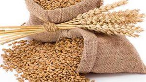 Wheat Europe
