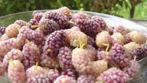Afghan fruits