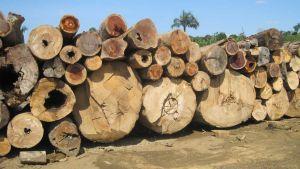 Brazil plywood