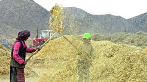 China grain