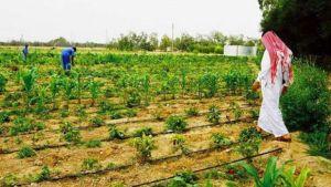 Farmer in Qatar