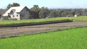 Philippines farm