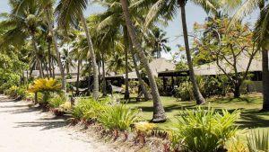Trees in Fiji