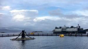 Atlantis Subsea Farming