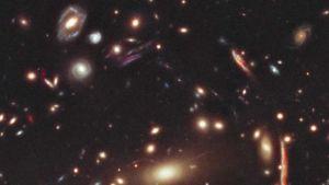 Galaxy XMM-2599