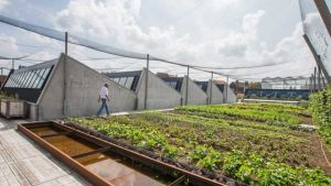Rooftop fish farming