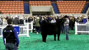 2020 Kentucky Farm Bureau Beef Expo