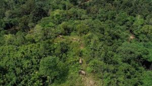 Indonesia trees