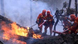 Sichuan blaze