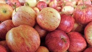 Apples New Zealand