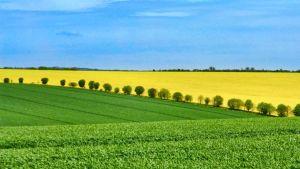 EU farm