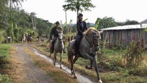Thailand horse
