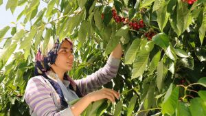 Turkish farm